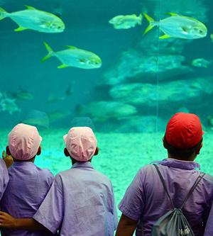 Students at the aquarium